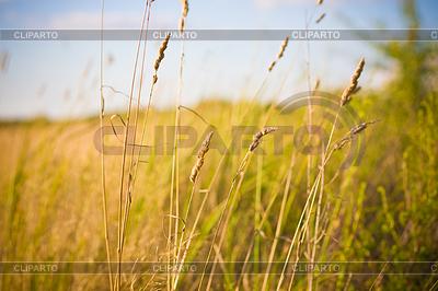 Light over field | High resolution stock photo |ID 3227527