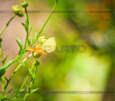 White butterfly on flower | High resolution stock photo |ID 3227530