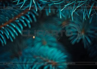 Spinne im Netz abgedeckt | Foto mit hoher Auflösung |ID 3265320