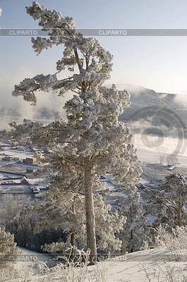 Snowy winter tree   High resolution stock photo  ID 3302669