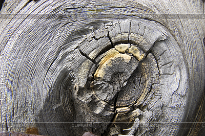 오래 된 나무 질감입니다. | 높은 해상도 사진 |ID 3303148