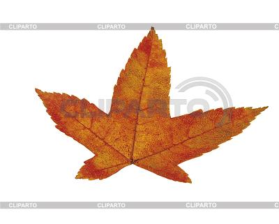 Pomarańczowy liść | Foto stockowe wysokiej rozdzielczości |ID 3317900