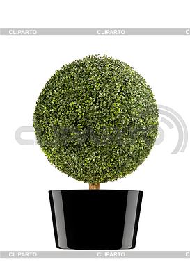 Arbusto redondo | Foto de alta resolución |ID 3317902