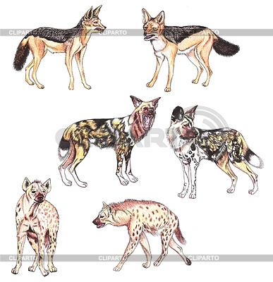 Schakale, afrikanische Wildhunde und Hyänen | Illustration mit hoher Auflösung |ID 3347864