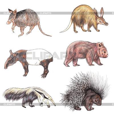 Экзотические животные | Иллюстрация большого размера |ID 3348252