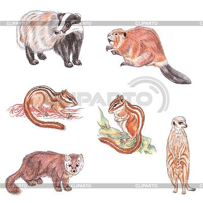Diverse Tiere | Illustration mit hoher Auflösung |ID 3348254