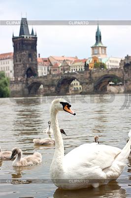 Praga. Most Karola w Pradze w Republice Czeskiej | Foto stockowe wysokiej rozdzielczości |ID 3371768