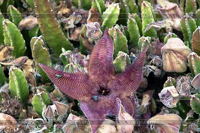 Carnivorous Succulent Cactus Plant | Foto stockowe wysokiej rozdzielczości |ID 3379355