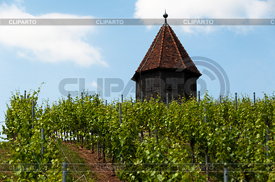Vineyard with Melac Tower in Obertürkheim | High resolution stock photo |ID 3379502